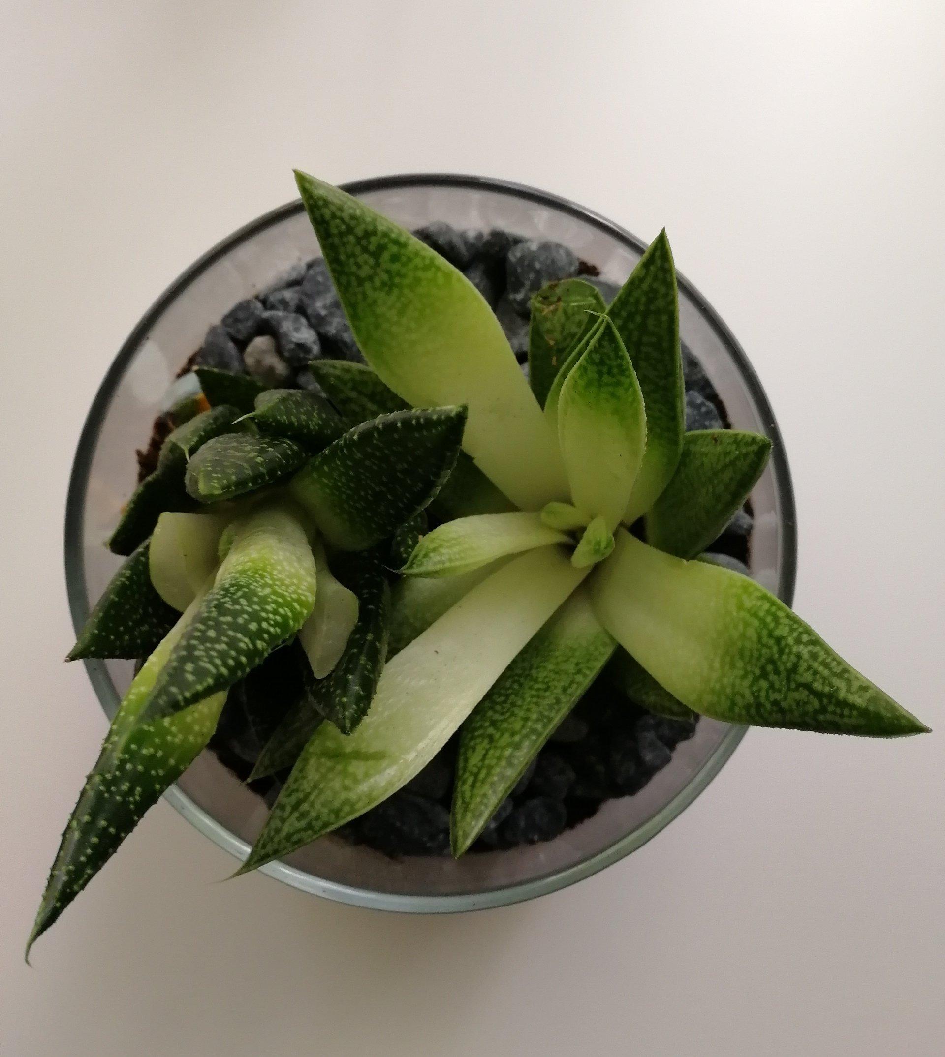Comment Faire Un Terrarium Plante Grasse comment fabriquer un terrarium en 5 minutes ! - les idées de